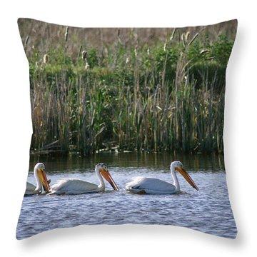 American White Pelicans Pelecanus Throw Pillow by Phil Schermeister