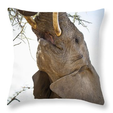 An Elephant Eats The Leaves High Up In Throw Pillow by David DuChemin