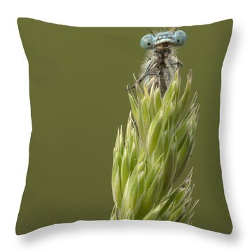 Animal Throw Pillow by Andy Astbury