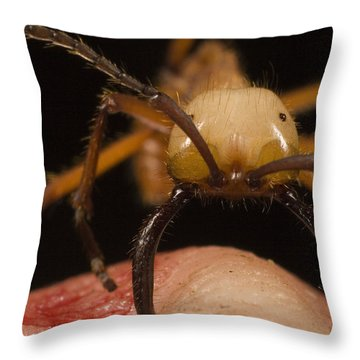 Army Ant Eciton Biting Finger Throw Pillow by Mark Moffett