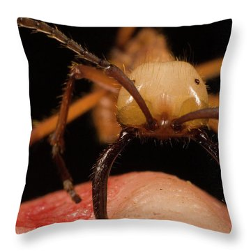 Army Ant Eciton Hamatum Major Worker Throw Pillow by Mark Moffett