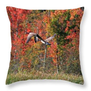 Autumn Vermont Geese And Color Throw Pillow by Deborah Benoit