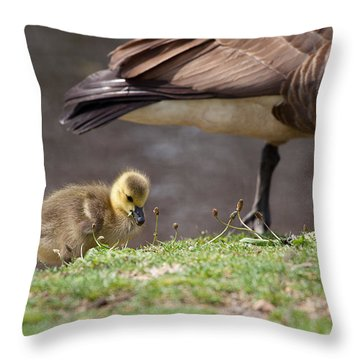 Baby Back Throw Pillow by Karol Livote