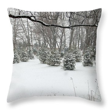 Baby Pines Throw Pillow by Aimee L Maher Photography and Art Visit ALMGallerydotcom