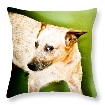 Back Off  Throw Pillow by Toni Hopper