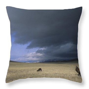Bactrian Camels In Bayan-ulgii,mongolia Throw Pillow by David Edwards