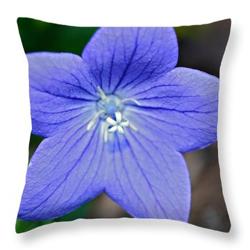 Balloon Flower Throw Pillow by Susan Leggett