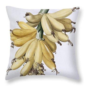 Banana Throw Pillow by Pierre Joseph Redoute
