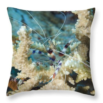 Banded Coral Shrimp Amongst Staghorn Throw Pillow by Steve Jones
