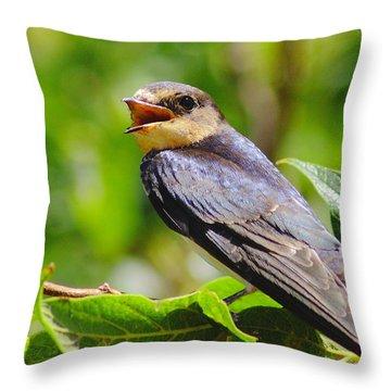 Barn Swallow In Sunlight Throw Pillow by Robert Frederick
