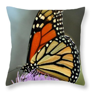 Beautiful Monarch Throw Pillow by Marty Koch