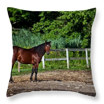 Beauty Of A Horse Throw Pillow by Karol Livote