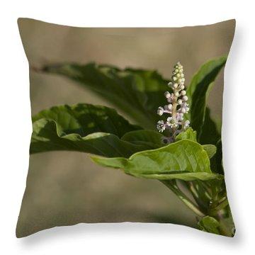 Beauty Of A Wildflower Throw Pillow by Deborah Benoit