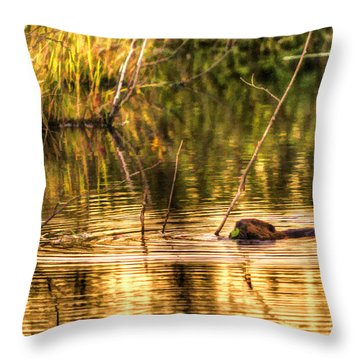 Beaver Eating Late Evening Throw Pillow by Dan Friend