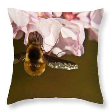 Bee Fly Feeding 5 Throw Pillow by Douglas Barnett