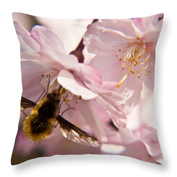 Bee Fly Feeding 6 Throw Pillow by Douglas Barnett