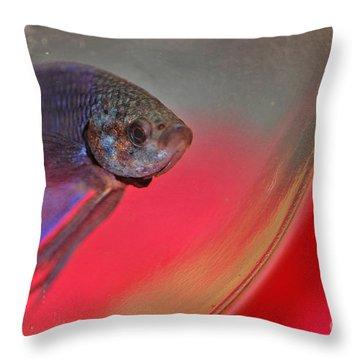 Beta Throw Pillow by Joann Vitali