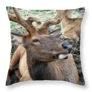 Big Fella Throw Pillow by Karol Livote