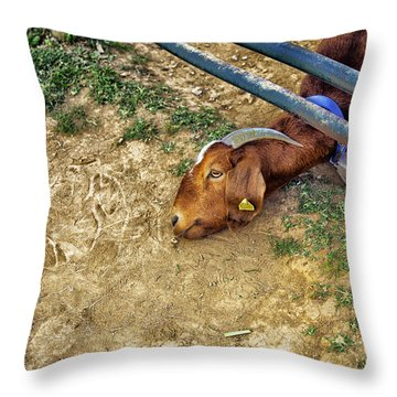 Billy's Escape Throw Pillow by Madeline Ellis