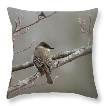 Bird - Eastern Phoebe - Very Contented Throw Pillow by Travis Truelove