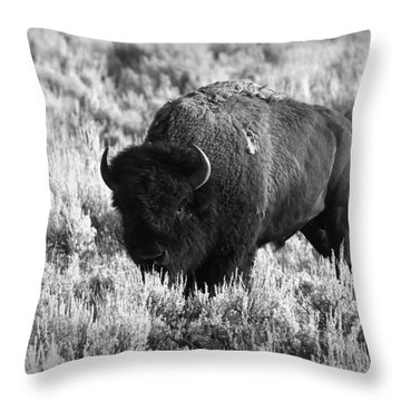 Bison In Black And White Throw Pillow by Sebastian Musial