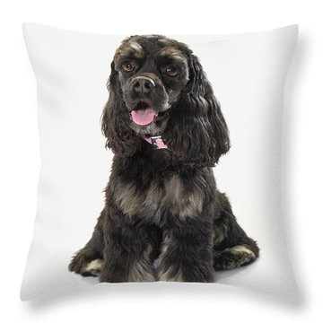 Black Cocker Spaniel With Golden Boots Throw Pillow by Corey Hochachka