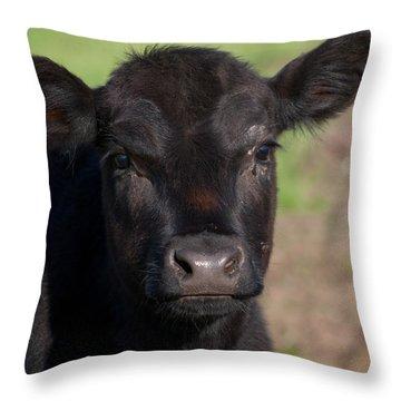 Black Cow Throw Pillow by Randy Bayne