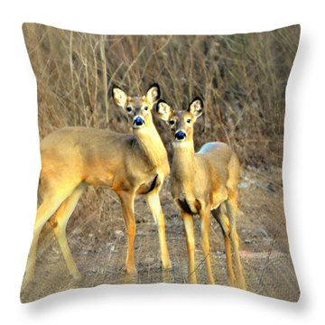 Black Ear Deer Throw Pillow by Marty Koch