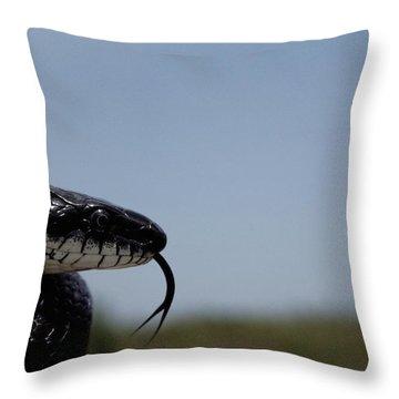 Black King Snake Lampropeltis Getulus Throw Pillow by Medford Taylor