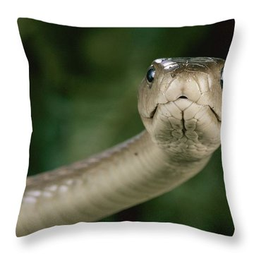 Black Mamba Dendroaspis Polylepis Throw Pillow by George Grall