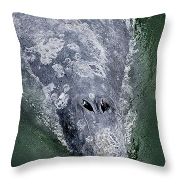 Blow-hole Throw Pillow by Greg Nyquist