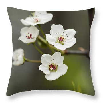 Bradford Callery Pear Tree Blossoms - Pyrus Calleryana Throw Pillow by Kathy Clark