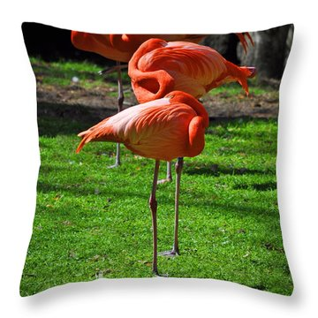 Brilliant Flamingos Throw Pillow by Mary Machare