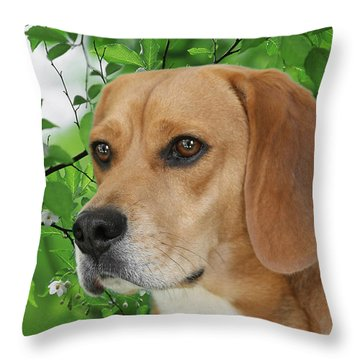 British Beauty Throw Pillow by Christine Till