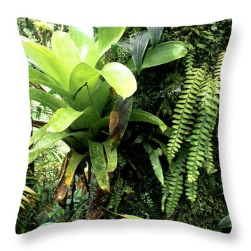 Bromeliad On Tree Trunk El Yunque National Forest Throw Pillow by Thomas R Fletcher