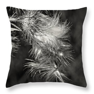 Bull Thistle Monochrome Throw Pillow by Steve Harrington