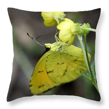 Butterfly - Yellow Sulphur On Yellow Throw Pillow by Travis Truelove
