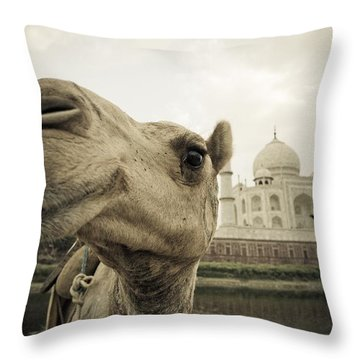 Camel In Front Of The Yamuna River And Throw Pillow by David DuChemin