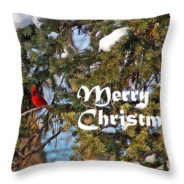 Cardinal Christmas Card Throw Pillow by Aimee L Maher Photography and Art Visit ALMGallerydotcom