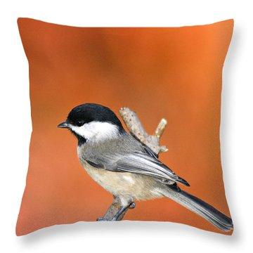 Carolina Chickadee - D007812 Throw Pillow by Daniel Dempster