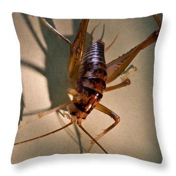 Cave Cricket In Shadow 2 Throw Pillow by Douglas Barnett