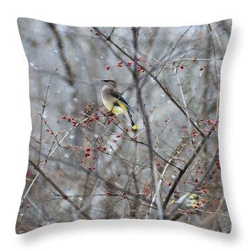 Cedar Wax Wing 3 Throw Pillow by David Arment