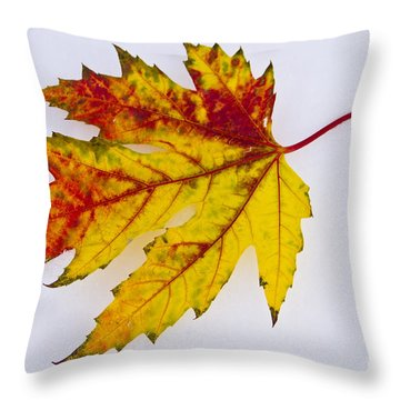 Changing Autumn Leaf In The Snow Throw Pillow by James BO  Insogna