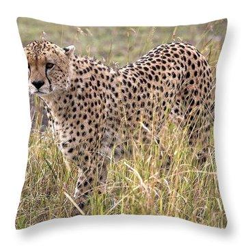 Cheetah Acinonyx Jubatus, Masai Mara Throw Pillow by Chris Upton