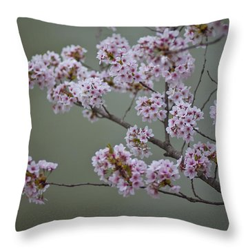 Cherry Tree Blossoms Hang Throw Pillow by Hannele Lahti