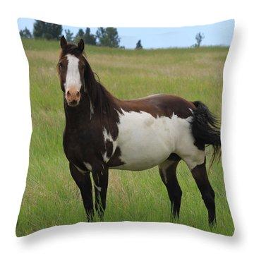 Chestnut Overo Paint Stallion Throw Pillow by Karon Melillo DeVega