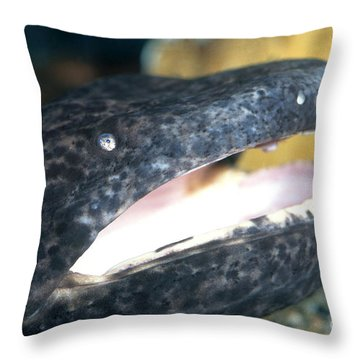 Chinese Giant Salamander Throw Pillow by Dante Fenolio