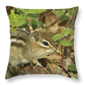 Chipmunk Throw Pillow by Michael Peychich