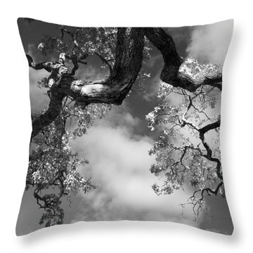 Cloudy Oak Throw Pillow by Laurie Search