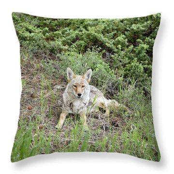 Colorado Coyote Throw Pillow by Jenna Szerlag